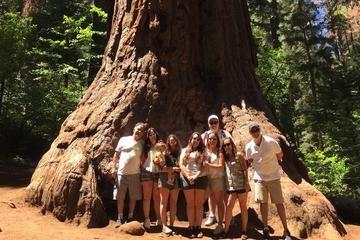 Book Off-Road Giant Sequoia 4x4 Tour on Viator