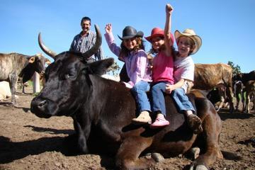 Excursión de día completo de aventura en un rancho y equitación