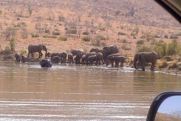 Pilanesberg National Park Day Tour...