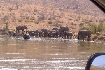 Pilanesberg National Park Tour from...