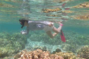 Island Safari Snorkeling by Motor Boat