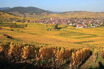 Alsace Half Day Wine Tour from Colmar