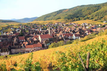 Elsässer Weinstraße: Weinprobentour...