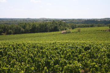 Gaillac wine tour from Toulouse half day