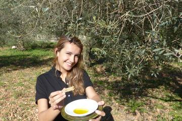 Mallorca Soller Olive Oil Tour...