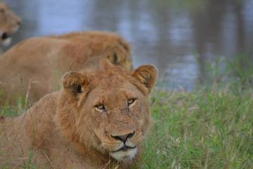 Kruger Park Guided Full Day Safari from Hazyview