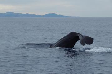 Excursão de observação de baleias e...