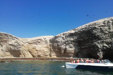 All-inclusive Ballestas-eilanden en ...