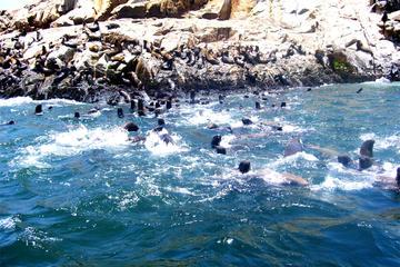 Crucero a las Islas Palomino y experiencia de nado con leones marinos...