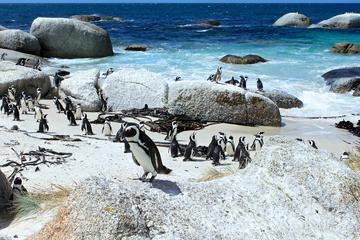 Privétour vanuit Kaapstad met het beste uitzicht op de Kaap