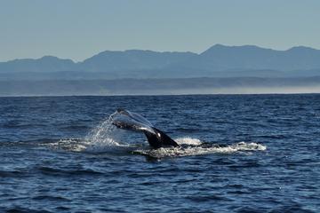 Tagestour mit Walbeobachtung und Weinverkostung ab Kapstadt