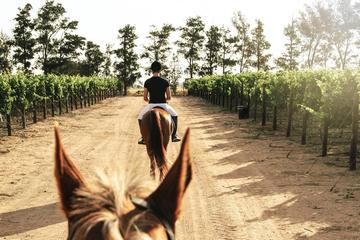 WINELANDS EQUESTRIAN ADVENTURE- HORSE RIDING & WINE