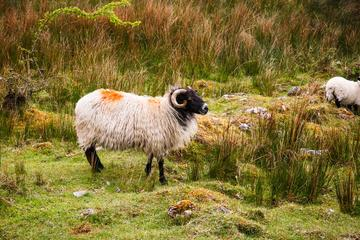 Full-Day Cuilcagh Legnabrocky Trail and Stairway to Heaven Hike from...
