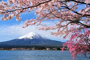 3D2N Tokyo - Kyoto,Osaka Tour (Mt Fuji, Kawaguchiko, Hida Takayama, Shirakawago)