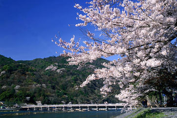 Day Trip by Bus from Osaka to Kyoto Arashiyama and Nara Todaiji...