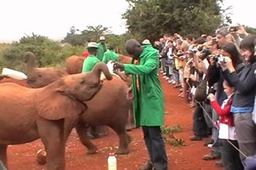 Full-Day Baby Elephant Orphanage and Giraffe Center Tour from Nairobi