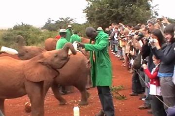 Half-Day Giraffe Centre and Baby Elephant Tour From Nairobi
