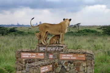 Nairobi National Park, David Sheldrick Elephant Orphanage, Giraffe Center and Karen Blixen Museum Day Tour in Nairobi