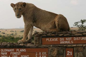 Nairobi National Park, Elephant Orphanage, Giraffe Centre, Bomas of Kenya and Karen Blixen Museum Day Tour
