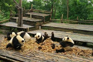 Private Tour: Customize Your Perfect Day in Chengdu