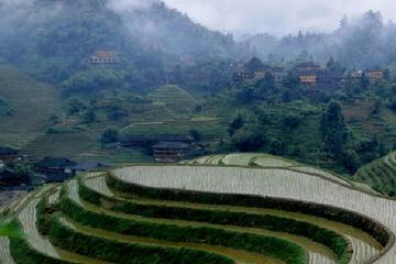 Private Tour of Dragon's Backbone Rice Terraces in Longsheng