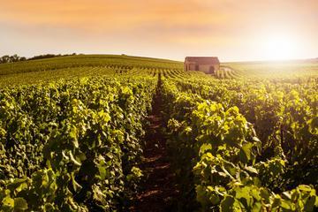 シャンパンが2回試飲できる、パリ発のシャンパーニュ地方ツアー