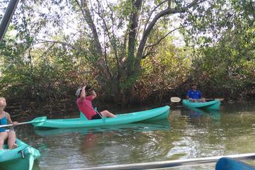 Mangrove Damas Island Kayak Tours