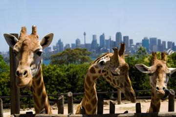 Allmän inträdesbiljett till Taronga Zoo