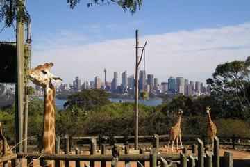 Excursion au zoo de Taronga à Sydney pour découvrir les animaux...
