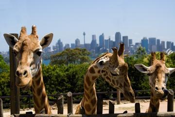 Ingresso geral de entrada no Zoológico de Taronga em Sydney