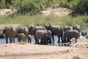 Tweedaagse safari Krugerpark vanuit Nelspruit, Whiteriver of Hazyview