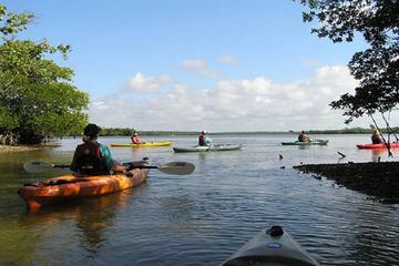 Happy Hour Kayak Tours in Sarasota