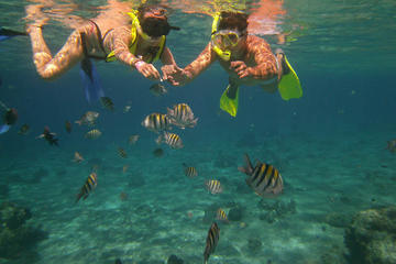 Cozumel Snorkel Adventure from Cancun