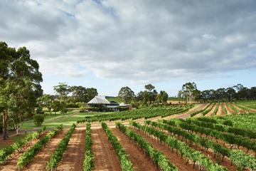 Vasse Felix Margaret River: Winery Tour and Private Wine Tasting