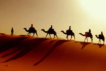 Desert Tour: Wahiba Sands, Wadi Bani and Khalid