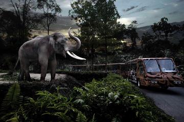 シンガポール ナイト サファリ(トラム優先乗車…