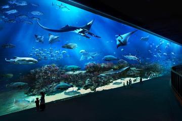 Keine Warteschlangen-Ticket: Tagespass für das SEA Aquarium mit...