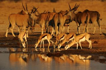 5-Day Exclusive Namibia Tour from Windhoek