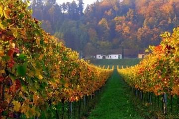 Recorrido vinícola e histórico por Villany y Pecs desde Budapest...