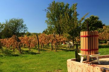 Recorrido vinícola y por la ciudad de Etyek desde Budapest
