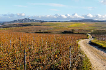 Wine and Cheese Day Trip in Loire Valley Region from Paris