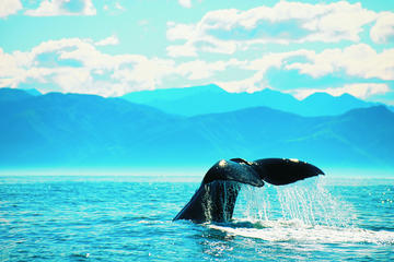 Whales and National Parks