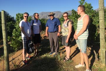 Potpourri Wine Tasting Tour in Stellenbosch