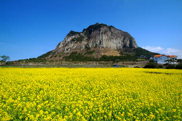 Full-Day Jeju West Coast Bus Tour...
