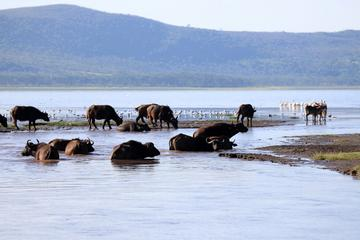 2 Day Tour Lake Nakuru Hells Gate and Lake Naivasha From Nairobi