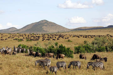 3 Days Masai Mara Camping Safari All...