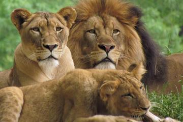 3 Days Masai Mara Camping Safari All Inclusive