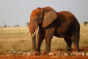 3 Days Tsavo West National Park Safari