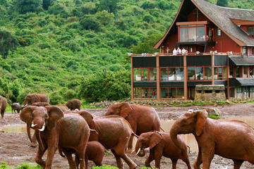 5-Day Aberdare Lake Nakuru and Masai Mara Safari from Nairobi