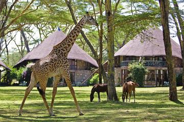 5days: Hell's Gate, Lake Naivasha, Lake Nakuru & Masai Mara Luxury Lodge Safari